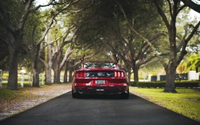 Picture trees, the fence, road, Mustang, Ford, back, tail light, farm, car exhaust