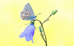 Picture flower, blue, butterfly, bell, yellow background