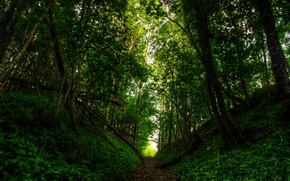 Picture road, forest, light, nature, forest, road, nature