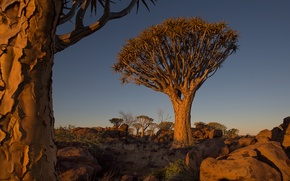 Picture the sky, trees, landscape, sunset, stones, Africa, Namibia
