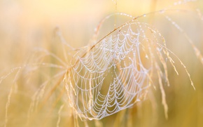 Wallpaper nature, web, autumn