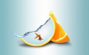 Picture water, orange, goldfish