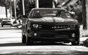 Picture auto, black, Chevrolet, chevrolet, camaro ss, Camaro