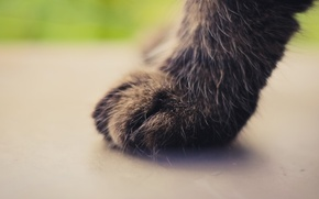Picture cat, cat, background, paw