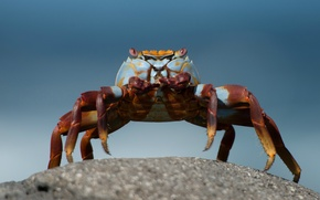 Picture macro, background, stone, Crab, turquoise