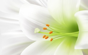 Wallpaper tenderness, Lily