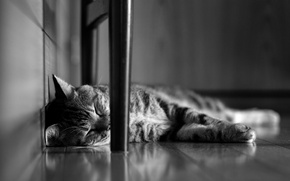 Picture cat, cat, sleeping, lies, black and white, striped