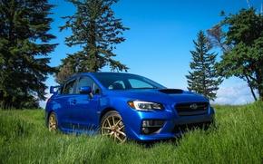 Picture Subaru, WRX, Blue, STI