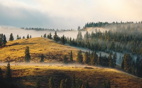 Picture the sky, clouds, fog, deer, hill, top, pine