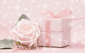Picture flower, rose, pink background, box. tape