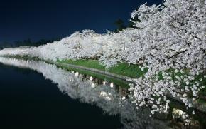 Picture light, night, pond, spring, garden, channel, flowering