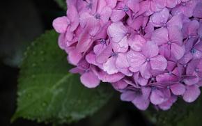 Picture greens, summer, flowers, Quattro, Sigma, Foveon