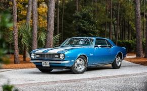 Picture Chevrolet, Camaro, Classic, 1968, z28
