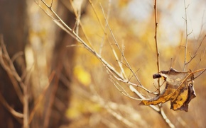 Picture macro, background, Wallpaper, blur, leaf, wallpaper, widescreen, background, bokeh, full screen, HD wallpapers, widescreen