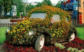 Picture flowers, beetle, garden, flowerbed, the idea
