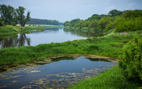 Picture grass, water, landscape, nature