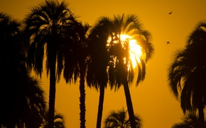 Picture the sun, sunset, palm trees, silhouettes