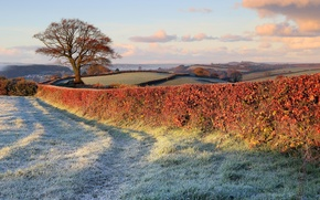 Picture frost, nature, tree, lawn, the fence, field, fence, late autumn