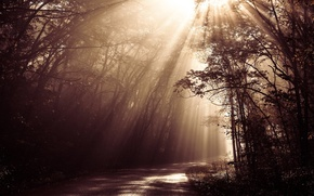 Picture forest, road, sunlight, beams, sepia