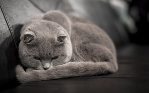 Wallpaper lies, grey, looks, cat