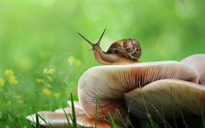 Wallpaper snail, greens, mushrooms, grass, bokeh