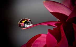Picture water, Rosa, drop, Flower
