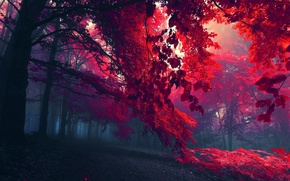 Picture FOREST, LEAVES, TREES, BRANCHES, AUTUMN, FOLIAGE, FOG