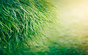 Picture greens, macro, Grass