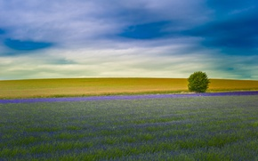 Picture field, England, lavender