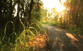 Picture sunlight, road, trees, Grass