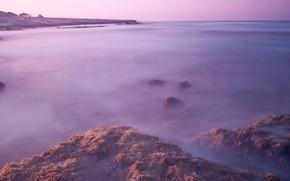 Picture sea, algae, surface, stones, dawn, shore, morning, excerpt