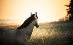 Picture field, the sun, tree, horse, wildlife