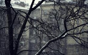 Wallpaper cold, winter, snow, Trees