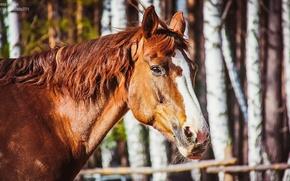 Picture horse, horses, horse, portrait of a horse