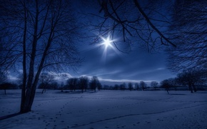 Picture winter, snow, night, nature