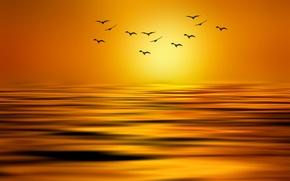 Picture the sun, birds, lake, paint, pack, styling, Josep Sumalla