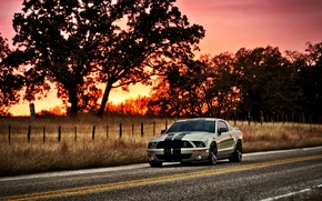 Picture the sun, sunset, tree, Mustang, Ford, Shelby, GT500, Mustang, silver, muscle car, Ford, Shelby, muscle ...