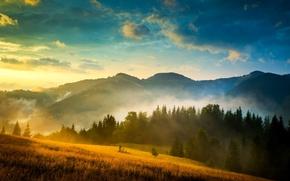 Wallpaper the sky, clouds, mountains, fog, field, Ukraine, forest, Carpathians