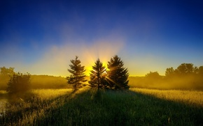 Picture forest, the sun, rays, sunrise, glade, tree