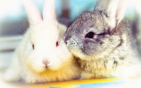 Picture animals, kiss, rabbits, cute