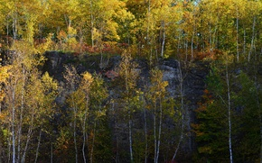 Picture autumn, trees, rock