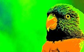 Picture bird, creative, my world