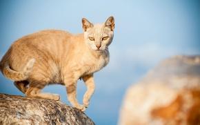 Picture cat, look, stones, red