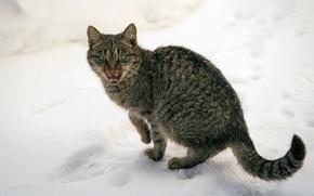 Picture cat, green-eyed, poor, meows, winter, frozen, snow, cat