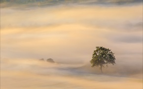 Picture trees, fog, tree, morning