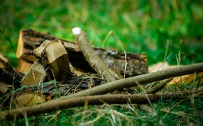 Picture forest, summer, grass, Wood