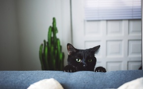 Picture cat, black, claws, looks