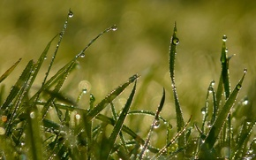 Wallpaper summer, grass, drops, light, Rosa, morning