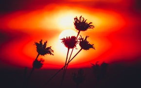 Picture grass, macro, sunset, flowers, silhouette, deadwood