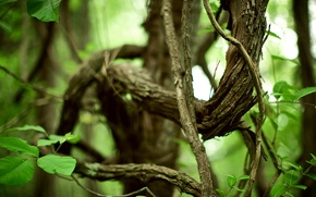 Wallpaper photo, the leaves of the trees, forest, life, plants, branch, nature, green, green life, foliage, ...